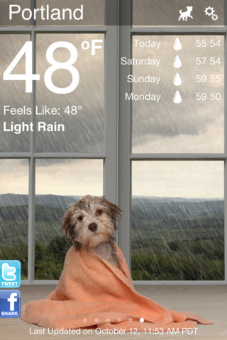 Weather Puppy