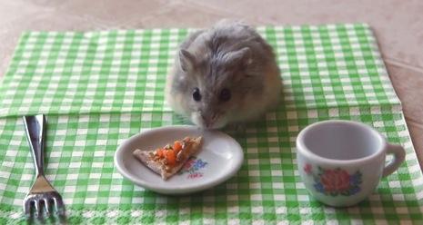 ピザを食べるハムスター