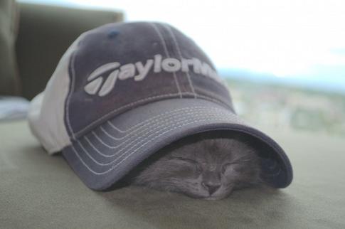 思わず癒された帽子をかぶったネコ